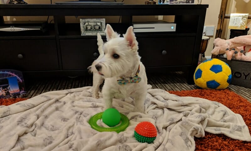 Woody trying to decide which toy to take
