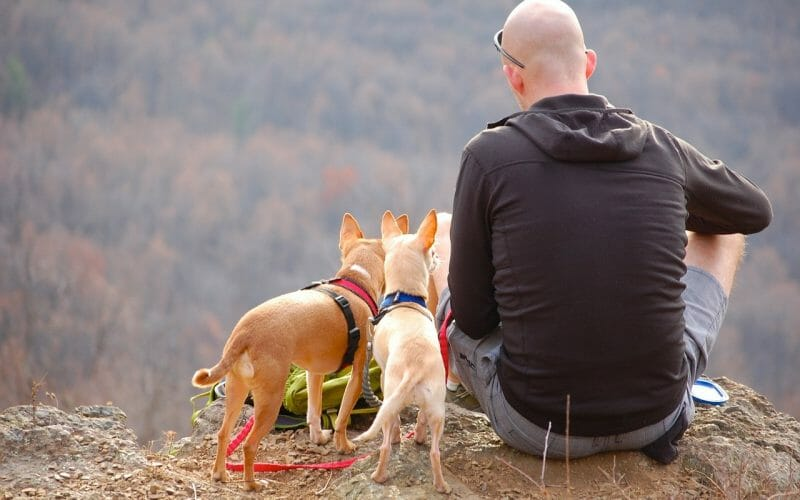 What is in your dog camping gear checklist?