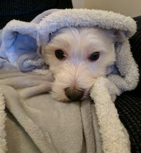 dog with warm camping blanket